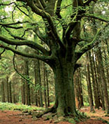 The Brocéliande Forest