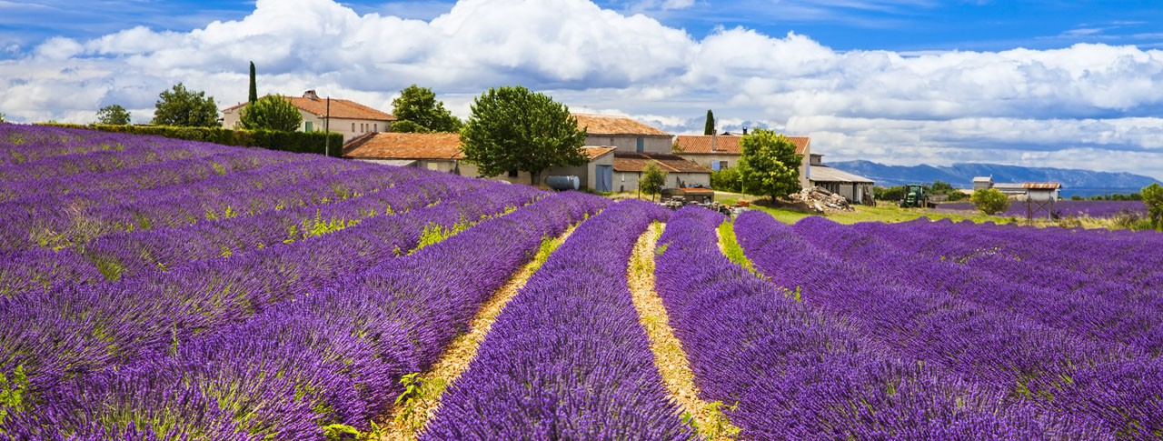 Lavender Fields France Map.Campsite Provence Campsites Near The Luberon The Lavender Fields