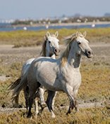 The Camargue Natural Park